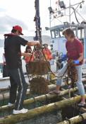 海中で熟成の酒を「水揚げ」 陸前高田、日本酒やワイン