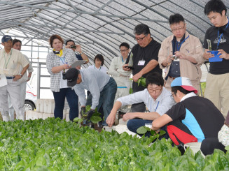ホウレンソウの収穫作業を見学する福祉施設関係者ら
