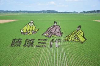 奥州藤原三代の図柄が浮かび上がるライスアート