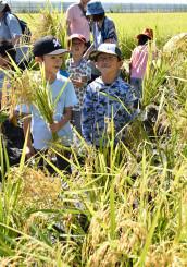 たかたのゆめの稲刈りに挑戦し、満足そうに笑みを広げる子どもたち