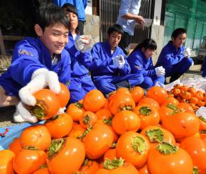 収穫した柿を丁寧に磨く甲子中の生徒=16日、釜石市甲子町