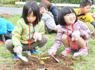 ハマナスの苗木を丁寧に植える園児