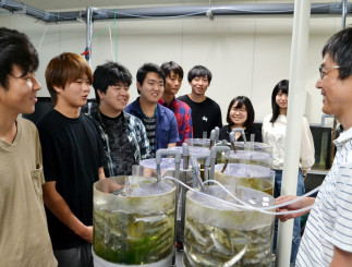 釜石キャンパスで学び始めた水産システム学コースの学生たち。後藤友明准教授(右)の指導を受けながら卒業研究に取り組む=釜石市平田・岩手大三陸水産研究センター