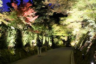 ライトに照らされた幻想的な空間が広がる中尊寺の境内