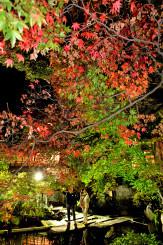 色づき始めたモミジ。ライトアップされ、夕闇に浮かび上がる=31日、盛岡市清水町・南昌荘
