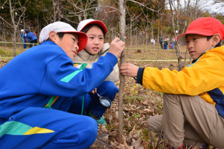 チョウセンアカシジミの卵を念入りに探す普代小の児童