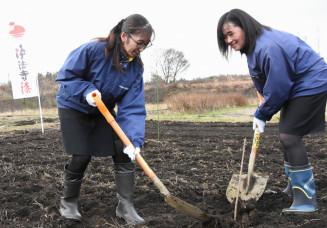 ウルシの苗木を植え、モデル林の整備を進める夢実耕望の社員