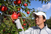 IT企業から農家転身 遠野・菊池さん、リンゴ生産に汗
