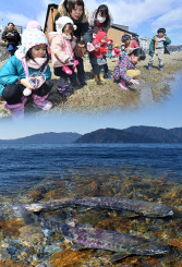盛岡市の中津川から放流した稚魚を見送る子どもたちと太平洋の長い旅を終えて回帰した親魚(コラージュ)。北上川水系の群れに注目が集まっている