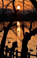 オレンジ色に染まった高松池。市民らが鮮やかな光景を楽しんだ=3日、盛岡市高松