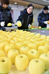 機械や目視でリンゴの選果作業を進める観光協会職員ら