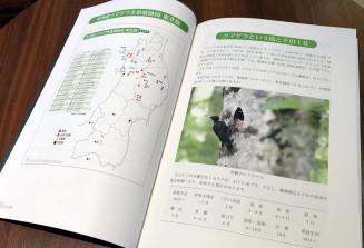 分かりやすい解説と豊富な写真で生態を紹介する「図録クマゲラ」