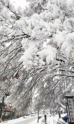 雪景色に一変した盛岡市内=12日午前11時