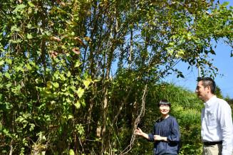 自生の漆の木を求めて広い県土を駆け回る浄法寺漆産業の松沢卓生社長(右)。未活用の木や土地の提供、植樹などを行う「漆のサポーター」を募集する