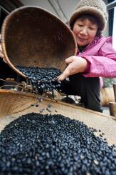 収穫した黒豆を打ち、選別する細川玲子さん=25日、紫波町西長岡