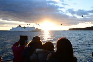 宮古―室蘭間の定期フェリーとウミネコに迎えられ、初日の出を眺める乗船客