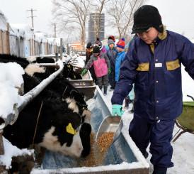 子牛に餌を与える子どもたち