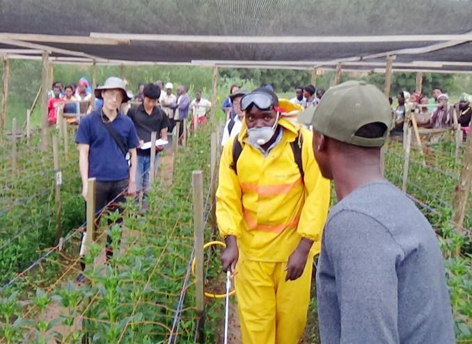 リンドウの圃場で、現地生産者の薬のかけ方を確認する八幡平市の生産者(左奥)=ルワンダ・キガリ(市花き研究開発センター提供)