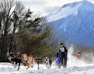 岩手山をバックに雪原を力強く疾走する犬たち=26日、八幡平市松尾寄木