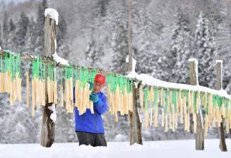 雪景色の中、寒風にさらした凍み大根の具合を確かめる中村一美さん=29日、西和賀町沢内字両沢