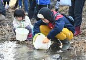 サケ戻る川、大切に 一関、児童ら稚魚1万匹放流