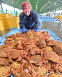 毛ガニ漁が最盛期を迎え、宮古市魚市場に次々と水揚げされている=19日、宮古市臨港通