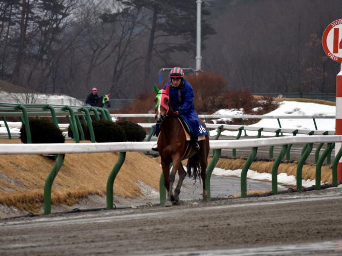 春競馬に向け、砂の感触を確かめる競走馬=20日、盛岡市新庄・盛岡競馬場