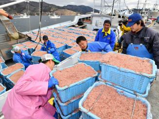 春の訪れを告げるイサダを水揚げする漁業者ら=21日午後2時11分、大船渡市大船渡町・市魚市場