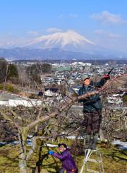 雪の岩手山を背に、リンゴの剪定作業に励む広田健さん(右)と慎太郎さん=23日、盛岡市三ツ割