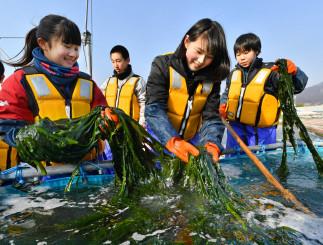 ボイル作業で鮮やかな緑色になったワカメをすくい上げる生徒たち