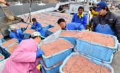 国洋(大船渡)イサダ新工場 肥満抑制効果のオイル抽出
