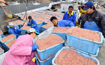 大船渡市魚市場に水揚げされるイサダ。高度利用化を目指し国洋が新工場を建設する=2月、大船渡市