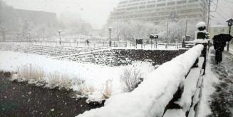 久々の積雪となった盛岡市内。視界が遮られるほどの吹雪にも見舞われた=14日午前8時30分ごろ、盛岡市・上ノ橋で撮影