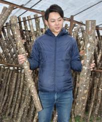 栽培しているシイタケの原木を見比べる兼沢悟さん。理想とする太い木(右)に復活させようと知恵を絞る=大槌町金沢