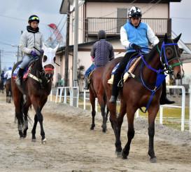 レース再開を翌日に控え、調教に向かう競走馬と調教師ら