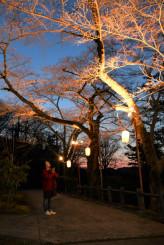 桜のライトアップが始まった釣山公園