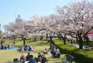 桜の見頃を迎えた日和山公園=山形県酒田市