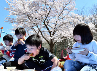 桜の下で給食を楽しむ児童