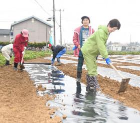 くわを使い被覆資材に土をかける参加者