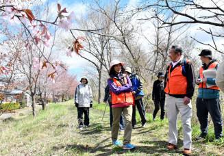 青空の下、桜の舞う道を歩く参加者