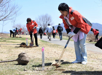 オオヤマザクラの苗木を植樹する中国人観光客