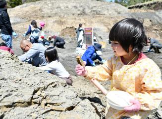 琥珀や化石を見つけようと採掘を楽しむ子どもたち