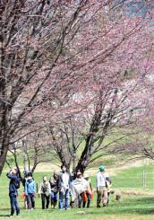 咲き始めのオオヤマザクラなどを楽しむ自然観察会の参加者