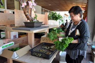 地元産の山菜を品定めする来場者
