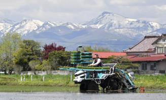 焼石連峰の残雪を背景に、金色の風の田植えに励む男性=7日、奥州市胆沢