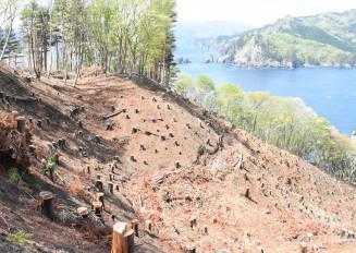 2020年度の復旧完了を目指し、急斜面での植栽作業が進む釜石市平田の現場
