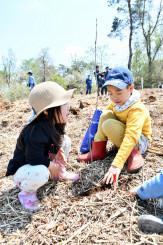 コナラの苗木に土をかぶせる子どもたち=洋野町