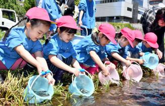 「元気でね」と声を掛け、中津川にアユを放す子どもたち