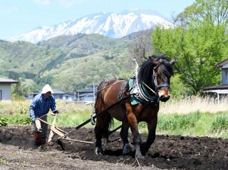 岩手山を背に力強く畑を耕す農耕馬