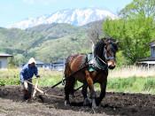 農耕馬 活用の場探る 県立大、本年度から実証事業